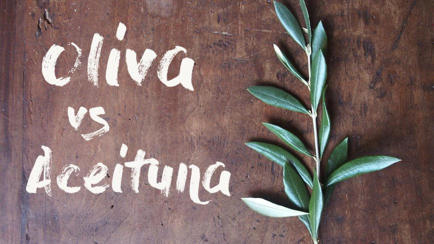 Aceituna vs oliva: resolviendo el gran dilema