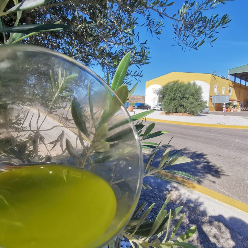 Óleo Jarico inicia su campaña de aceite de oliva virgen extra