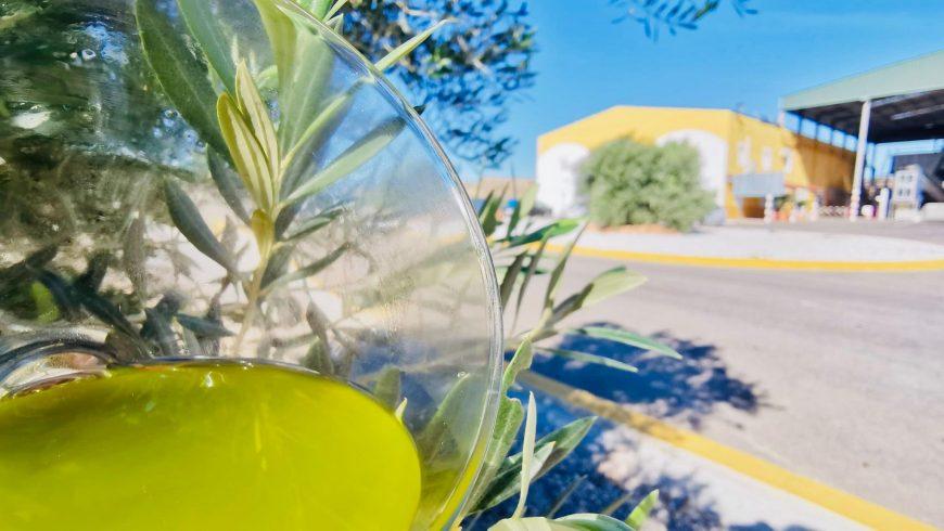 Los polifenoles, una 'navaja suiza' nutricional con muchos beneficios