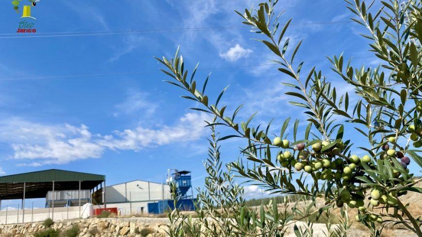 Óleo Jarico comienza una nueva temporada del aceite de oliva con instalaciones renovadas