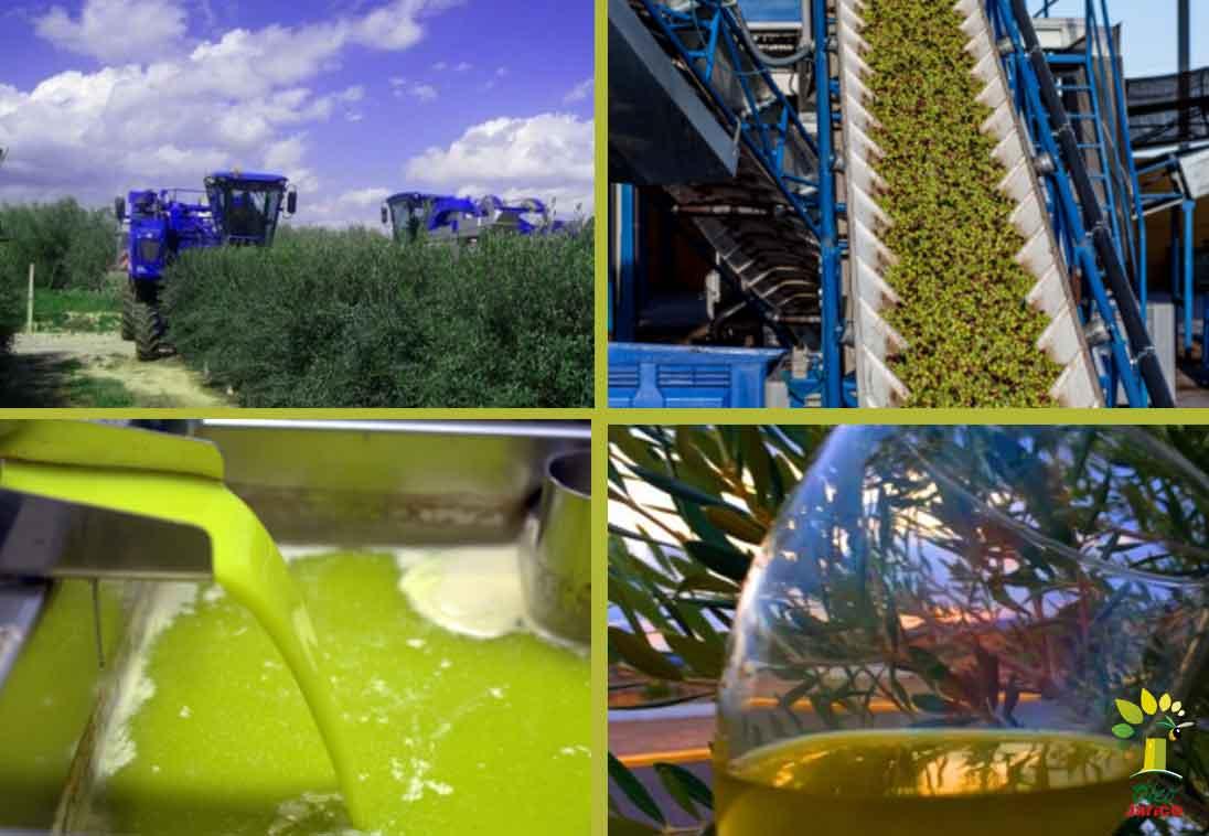Cómo escoger un aceite virgen extra de calidad