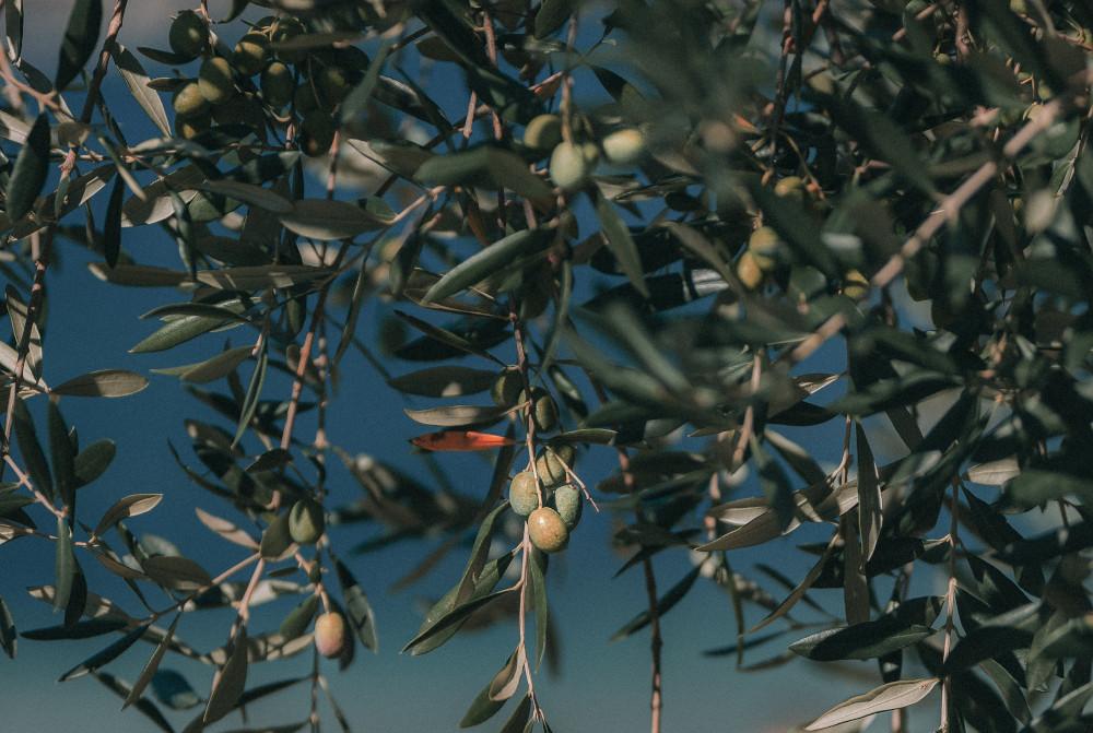 Aprobada la extensión de norma del aceite de oliva: ¿qué supone para el consumidor?